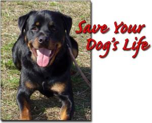 Dog Safe
